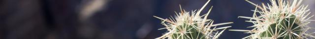 palmspringscactus640x80