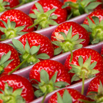 strawberries150
